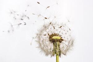 Akupunktur unterstützt bei Pollenallergien